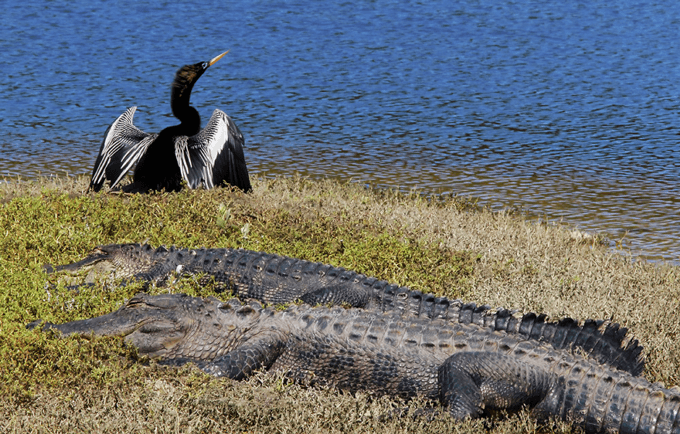 3 Reasons to Take an Airboat Ride in the Fall