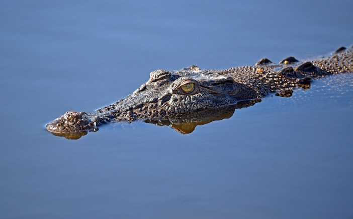Is it Safe to Swim in the Everglades?