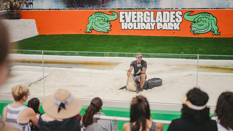 How do you wrestle an alligator - Everglades Holiday Park