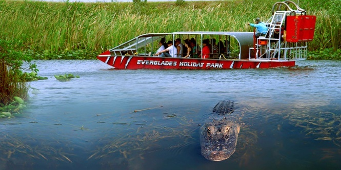 Everglades eco tours