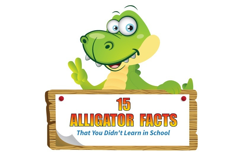 alligator facts