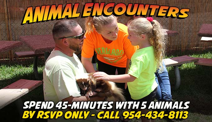 Animal Encounters - Everglades Holiday Park