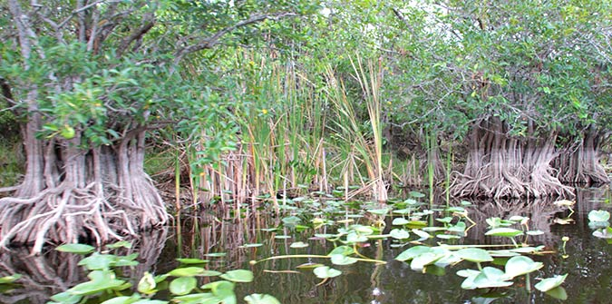 December through April is Dry Season in the Everglades