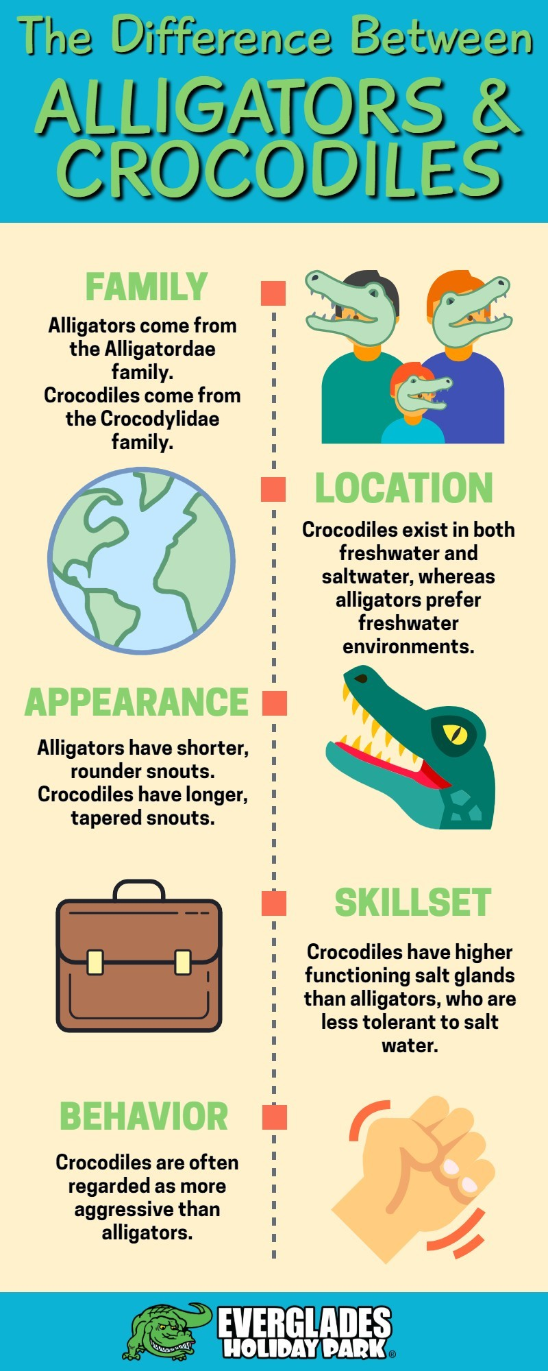 difference between alligators and crocodiles - Infographic