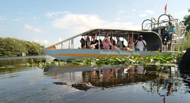airboat tour near alligator alley