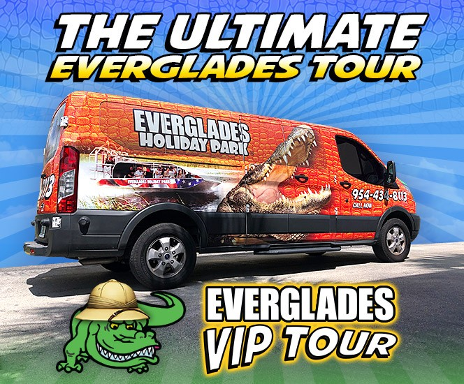 Everglades VIP Tours at Everglades Holiday Park