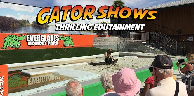 Everglades Alligator Show Attraction