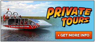 Private Airboat Tours at Everglades Holiday Park
