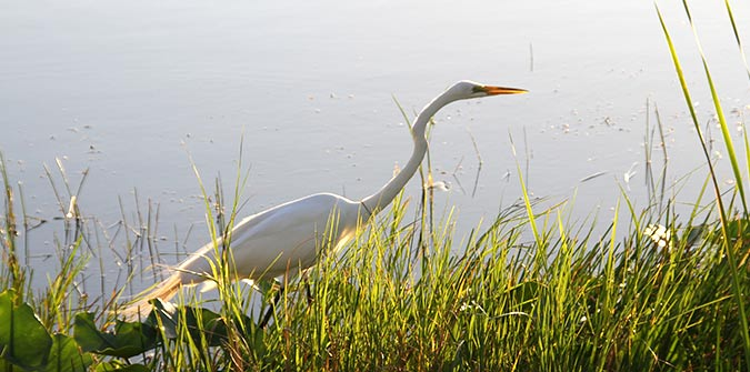 Bird watching in the Everglades - Family fun - Everglades Holiday Park