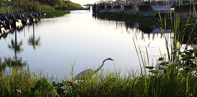 Tips for Bird Watching in the Everglades - Everglades Holiday Park