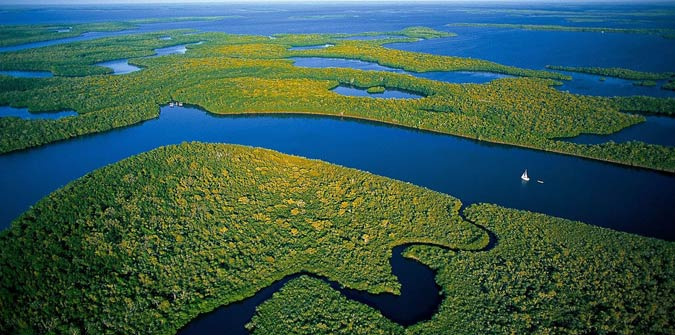 Unique Facts About the Everglades - Everglades Holiday Park