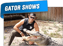 Everglades Gator Shows | Ft Lauderdale Airboat Tours | Everglades Airboat Tours