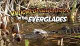 Everglades Airboat Tours, Gator Shows, Fishing Boat Rentals | Everglades Holiday Park