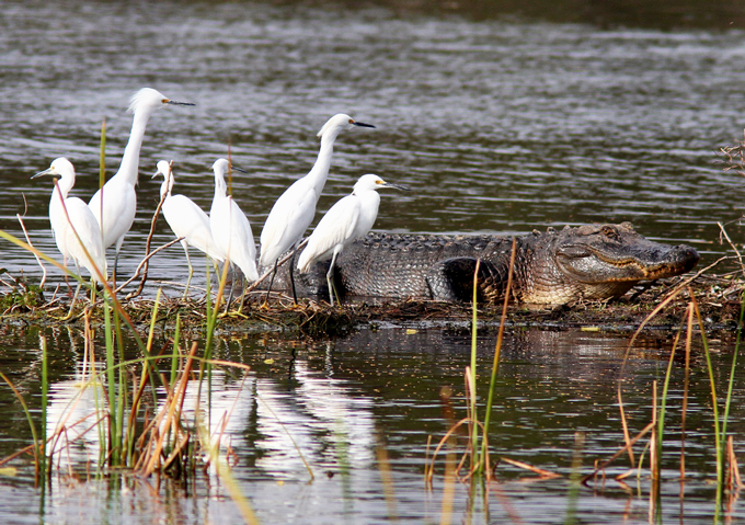 Everglades Wildlife
