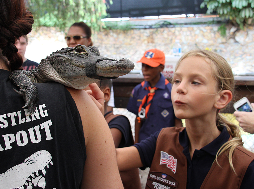 hold a baby alligator